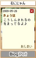 Neko_20090526
